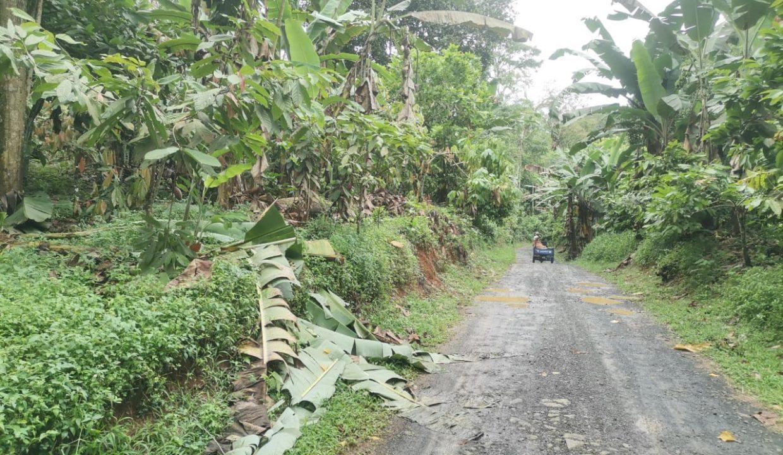 TER101 Plantação de cacau de 8 hectares na zona de Santo António 010
