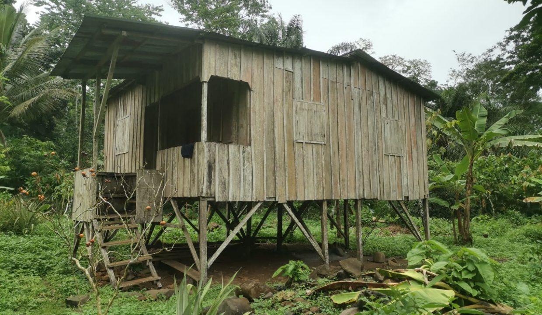 TER101 Plantação de cacau de 8 hectares na zona de Santo António 019