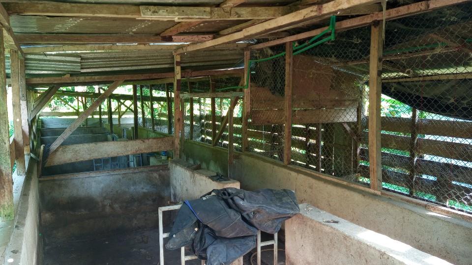 TER112 Terreno 3-2 ha com casa e criação de animal – Conde-019