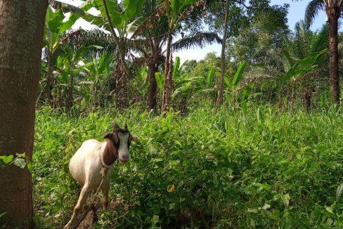 TER112 Terreno 3-2 ha com casa e criação de animal – Conde-029