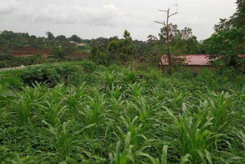 PRO 104 Terreno 5000m2 com armazem Palmar Sao Tome_04