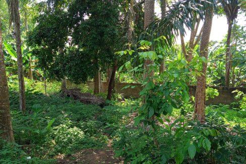 VEN20_Casa grande luxo com quintal 1 ha Me Zochi Sao Tome vender_08